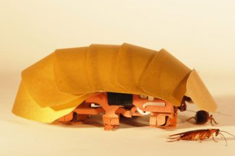 Gross creepy-crawly inspires robot design