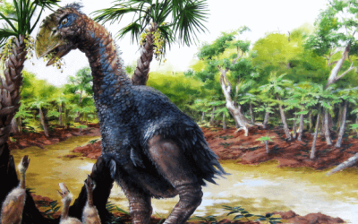 Giant bird browsed in the Arctic twilight 50 million years ago