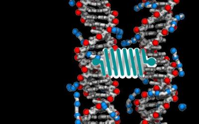 Genetic switch could be key to increased health and lifespan