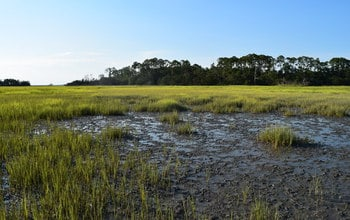 Biodiversity in salt marshes builds climate resilience