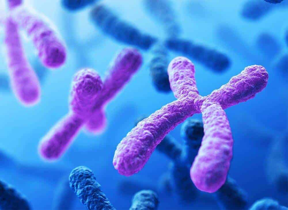 Chromosome For Girl Sequencing All 24 Human Chromosomes Uncovers Rare