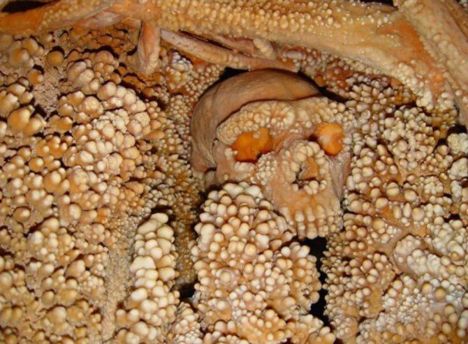 170,000 year old Neanderthal skull