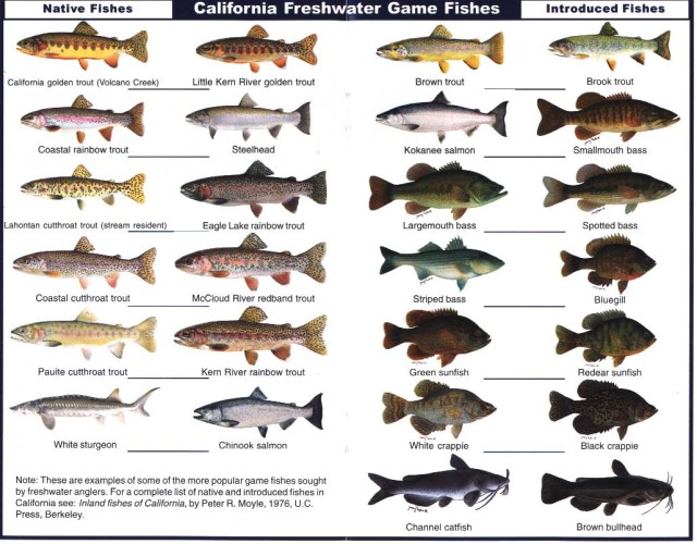 Freshwater fish list to eat freshwater fish fishing for Fish types to eat