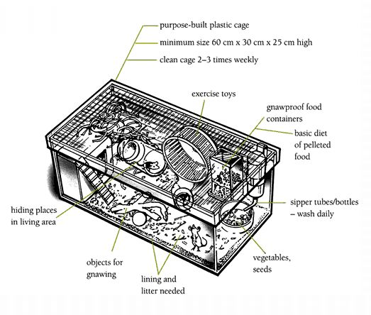 Cage diagram / Mice / Animal care / Caring for Animals / Ethics