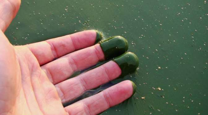 What is Eutrophication? What are its Causes & Effects?