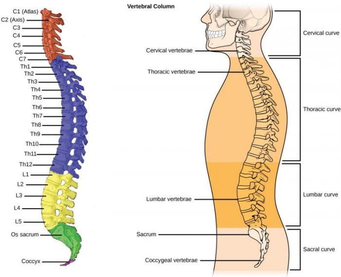 Labeled Human Skeleton Science Trends