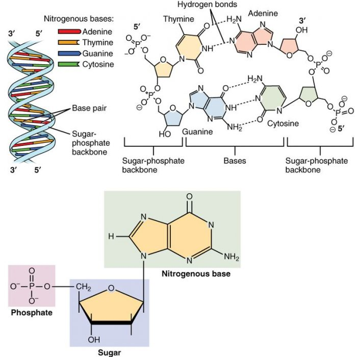 What Are The Monomers Of Lipids? Science Trends