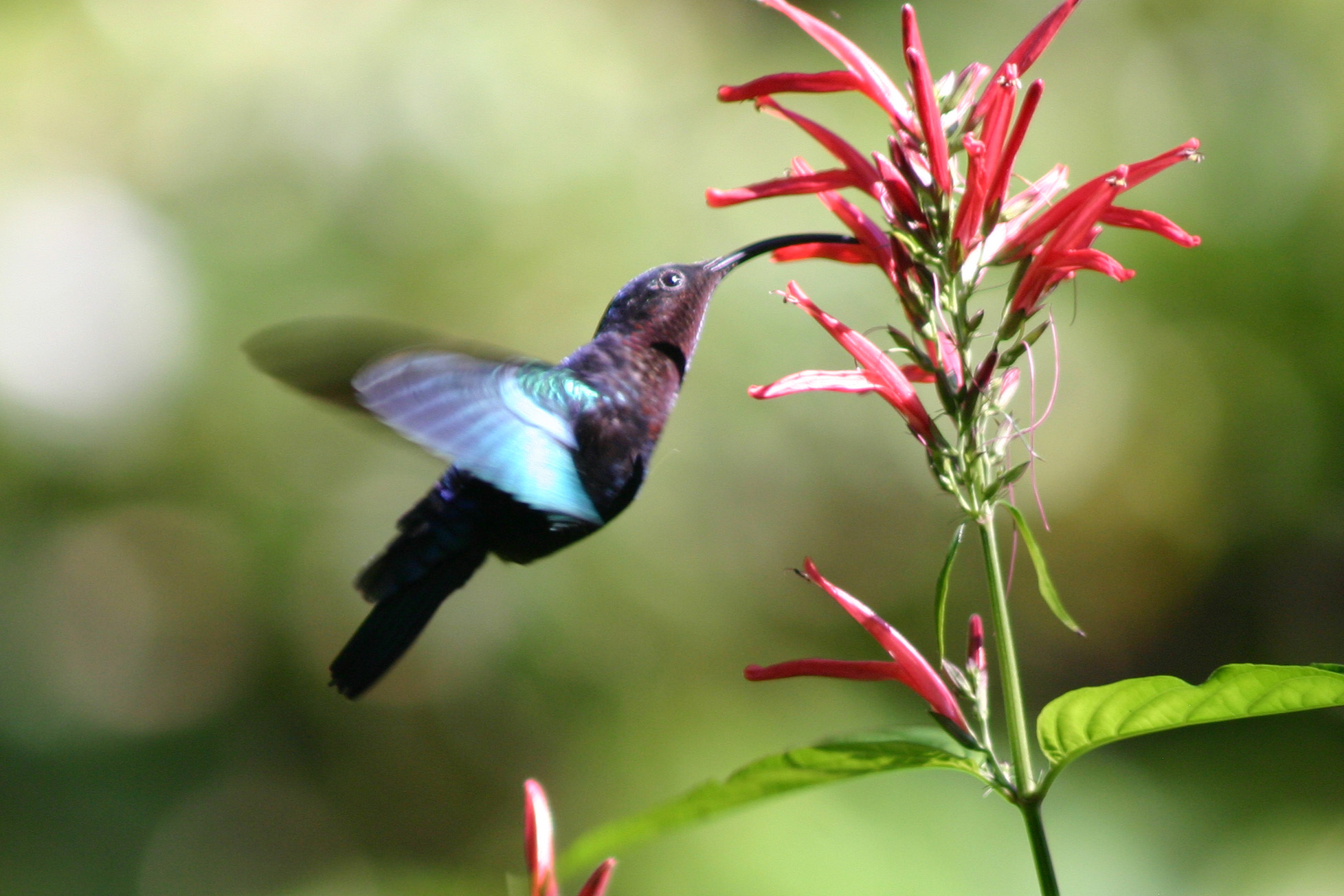 Fullsize Of Where Do Hummingbirds Sleep