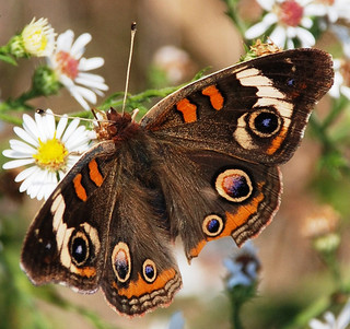 What is the difference between a butterfly and a moth?