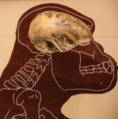 Demystifying the Brain - the Brains of our Ancestors