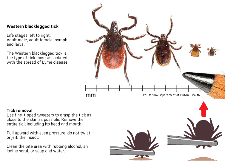 Ticks carrying Lyme disease are not a major threat in Southern
