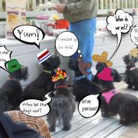 Friday's Foto Fun - A Scottie Picnic
