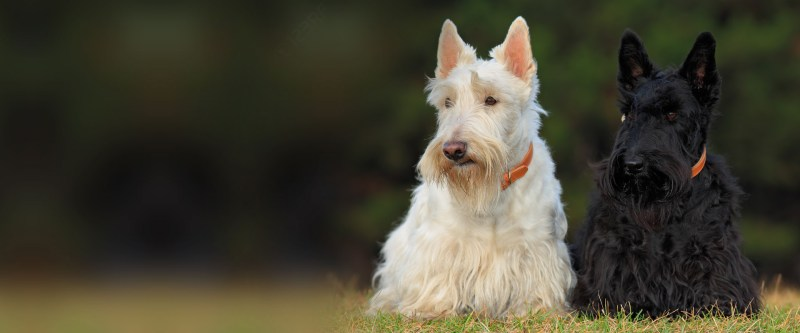 Large Of All Terrier Rescue