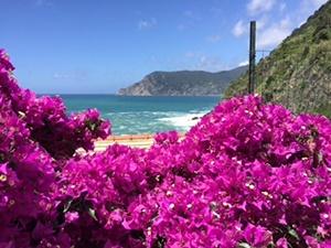 Cinque_Terre_bouganvillea_ocean_Mont_SKT