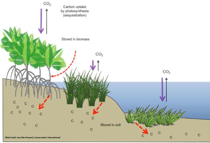 Coastal Wetland Diagram Online Wiring Diagram