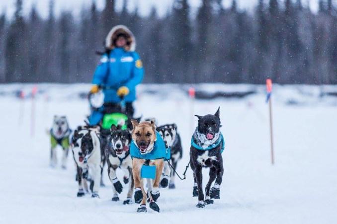 Matthew-Failor-Racing-Iditarod
