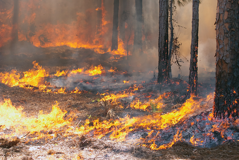 Survival strategies to help you escape a forest fire
