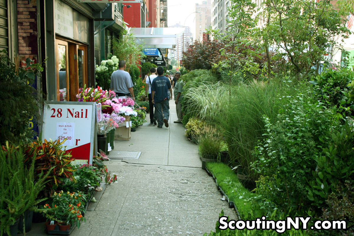 Bella Arte Florist The Jungles Of West 28th Street Exploring New York S Flower