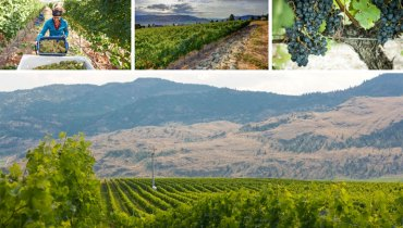 OPPORTUNITY KNOCKS | 'Tinhorn Creek' Has Positions Open In Vineyard, Cellar, Hospitality