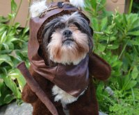 Ewok Dog Costume | ScrappyBook