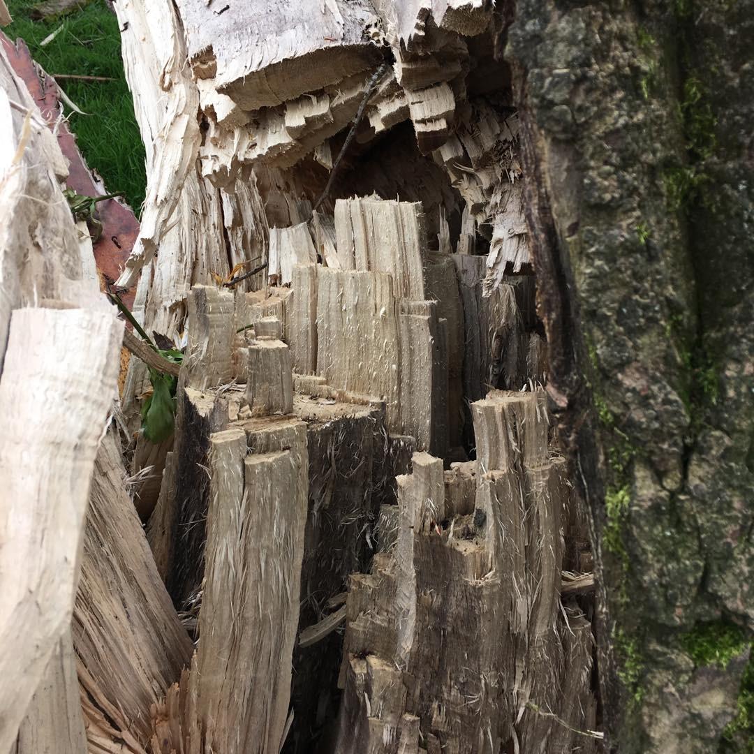 Inside a fallen tree