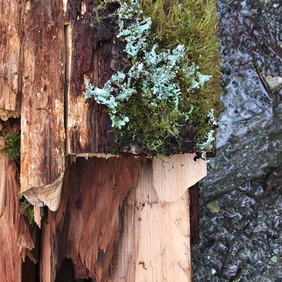 Deadfall, Deadhorse Canyon