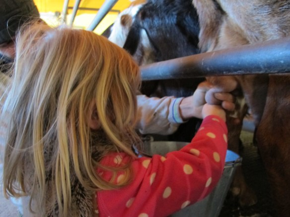 Then it was Lola's turn to milk the goat - she was a natural.