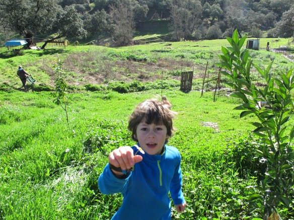 Zac in the kitchen garden - lush, green and the perfect space for kids to run about in.