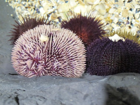 You can touch sea urchins, though watch out for those spikes.