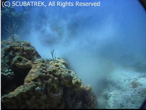 corals spawn