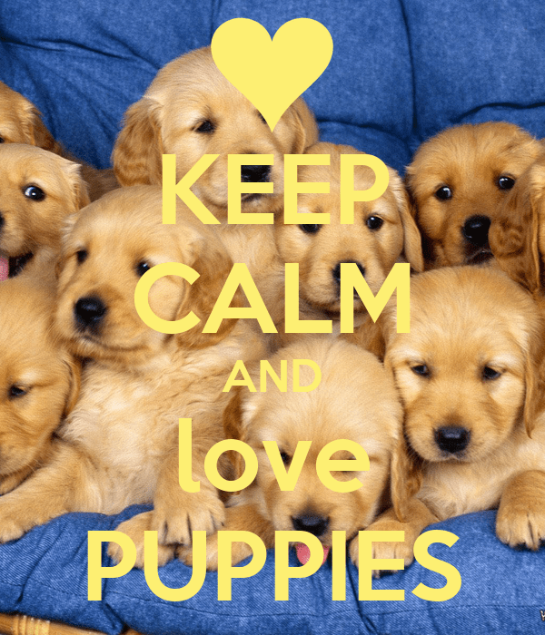 Cute Baby Puppy Pictures Wallpaper Keep Calm And Love Puppies Poster Madison Keep Calm O