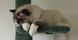 Harley asleep on the scratching post