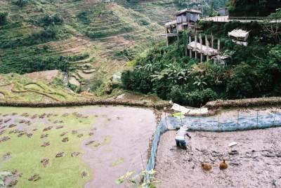 フィリピン、バナウェ。田植えをしていたおばさん