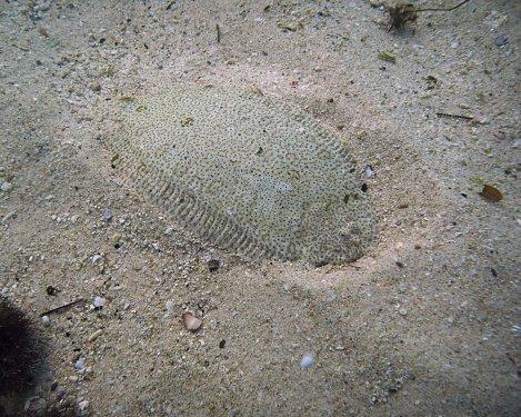 A Flounder in Dar es Salaam 1280 x 1024