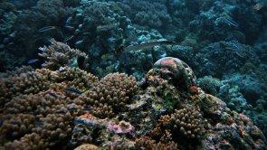 Zanzibar Reef 1920 x 1080