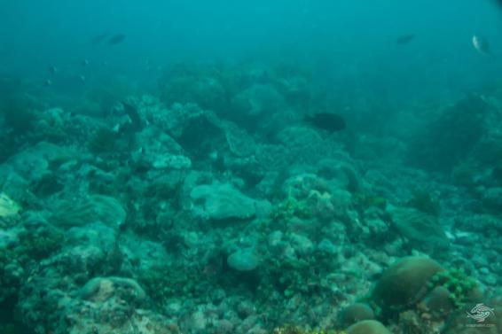Looking over the reef at Powoni near Paje in Zanzibar