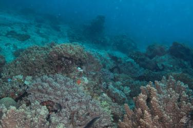 A view of Bongoyo patches showing hard and soft corals