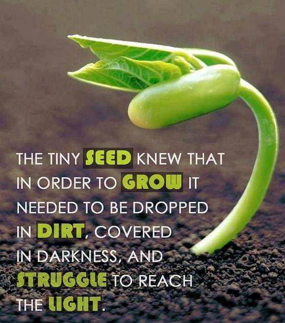 The tiny seed knew that in order to grow...