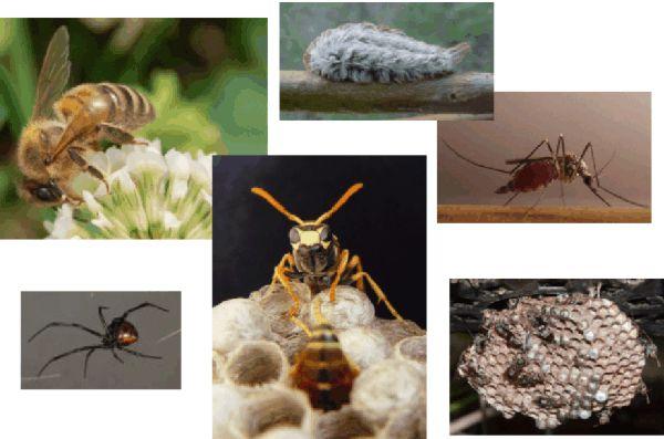 Stinging and Biting Pests UGA Cooperative Extension