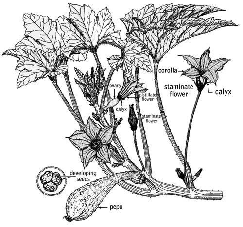 tree flowers diagram