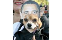 Dogs dressed up in Halloween costumes - Telegraph