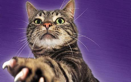 Pet Subjects Advice On Cats And Dogs Telegraph