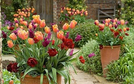 Container Gardening Five Of The Best Flowers For Outdoor