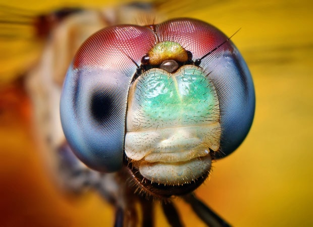 Macro photographs of bugs\u0027 eyes Thomas Shahan goes eyeball-to
