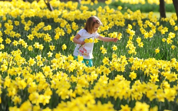 The mystery of spring is solved - Telegraph - photo of spring