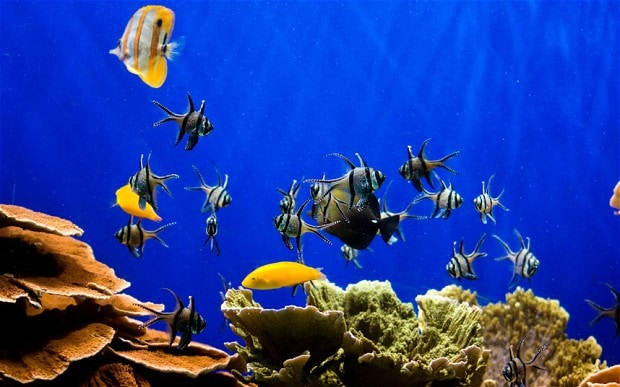 New 3d Animation Wallpaper Fish Tanks Lower Blood Pressure And Heart Rate Telegraph