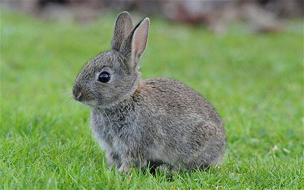 Pet Subjects How Can I Keep My Rabbits Warm This Winter