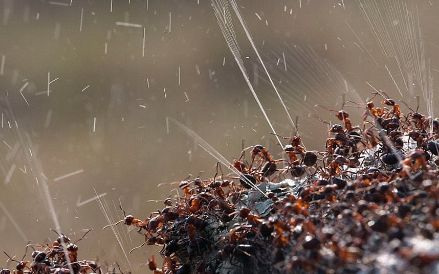 Air Travel Uk Weather Ants Fire Acid To Ward Off Predators Telegraph