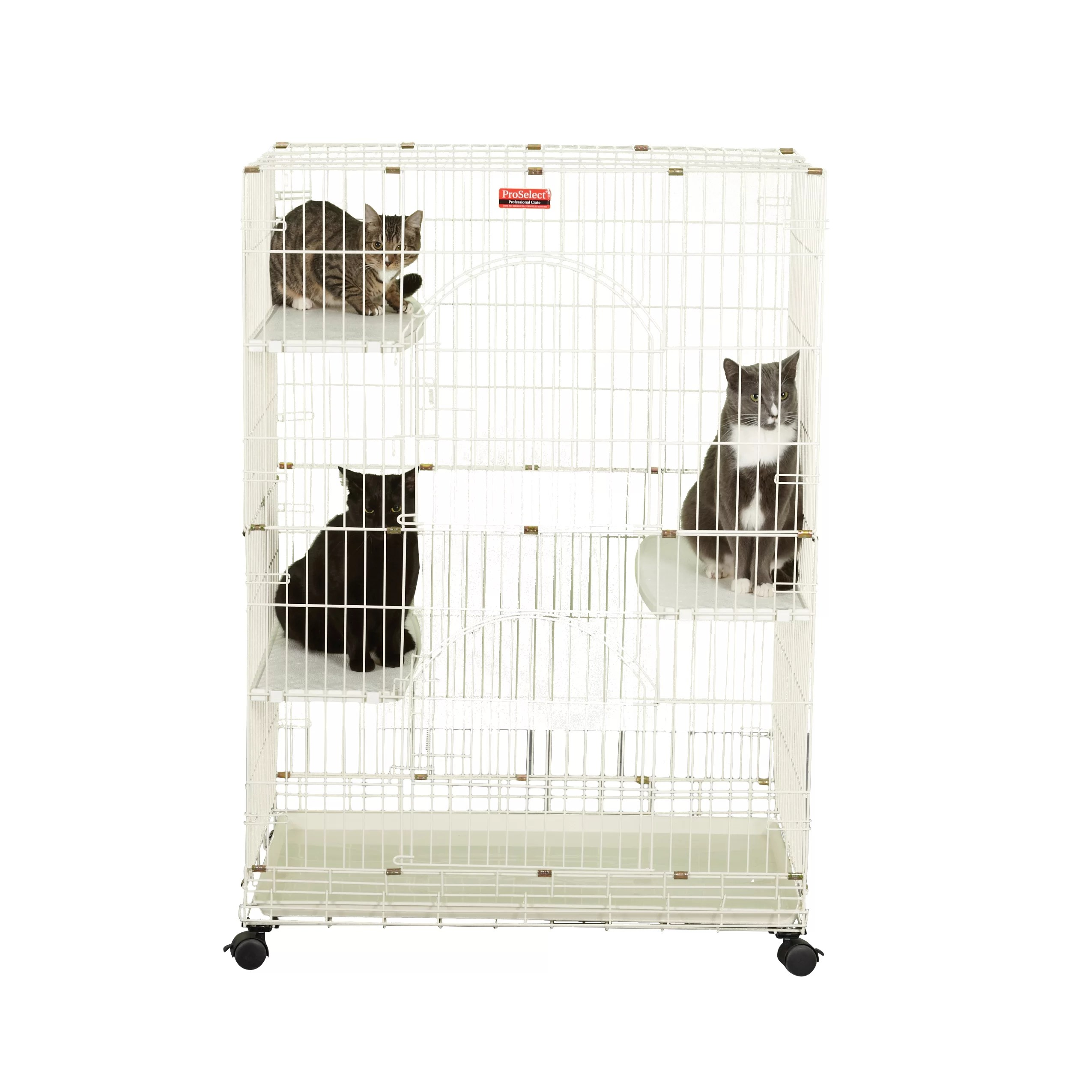 Cage Exterieur Chat Proselect Foldable Cat Crate And Reviews Wayfair