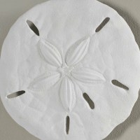 Beachcrest Home Sand Dollar Wall Dcor & Reviews | Wayfair